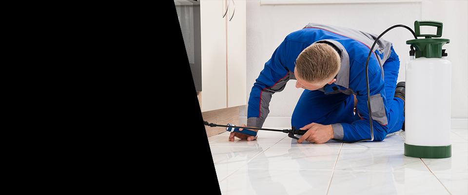 Superior Pest Control Services